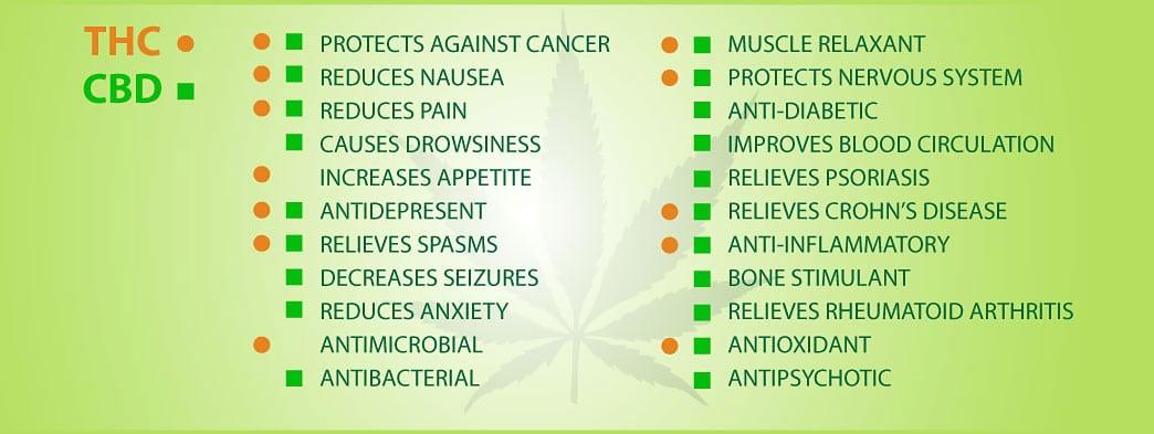 Cannabis Thc And Cbd Pbe Expert Inc